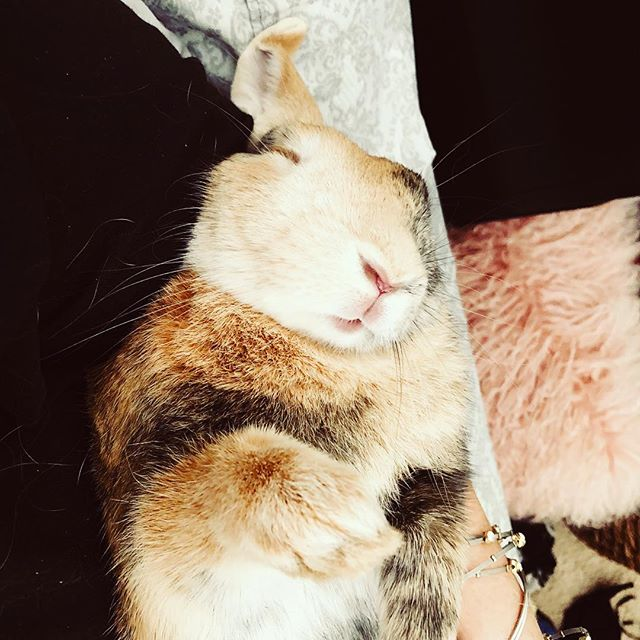 Fast asleep . Look at his lil pink  #bunny #bunnylove