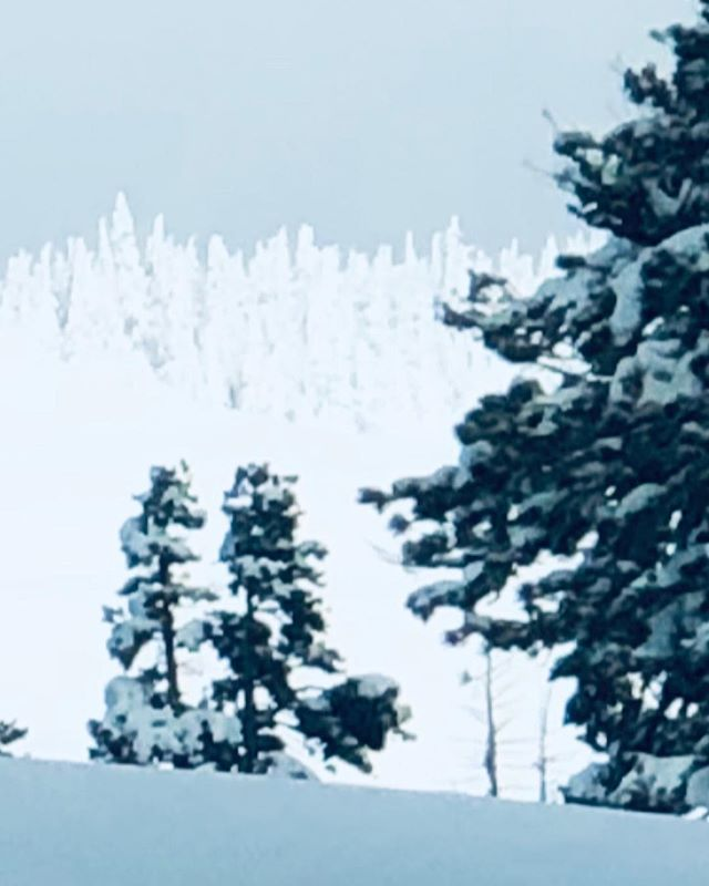 The tress are as white as the snow on the ground. What a wonder️️️ #whitesnow #snowfall #donnerpass #beauty #love #peace