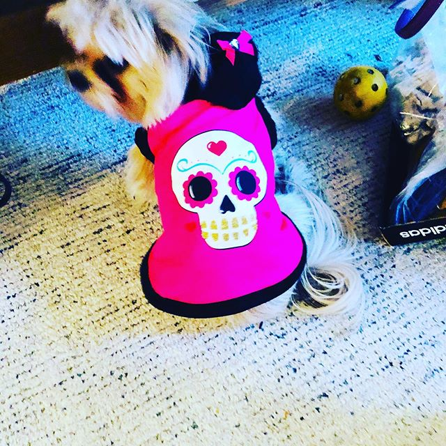 My little angel is all ready to trick or treat!!#halloweencostume #halloween #puppylove #mybaby
